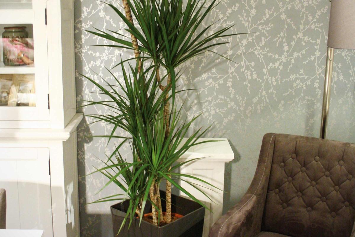 Luftreinigende Pflanzen Luftfilter