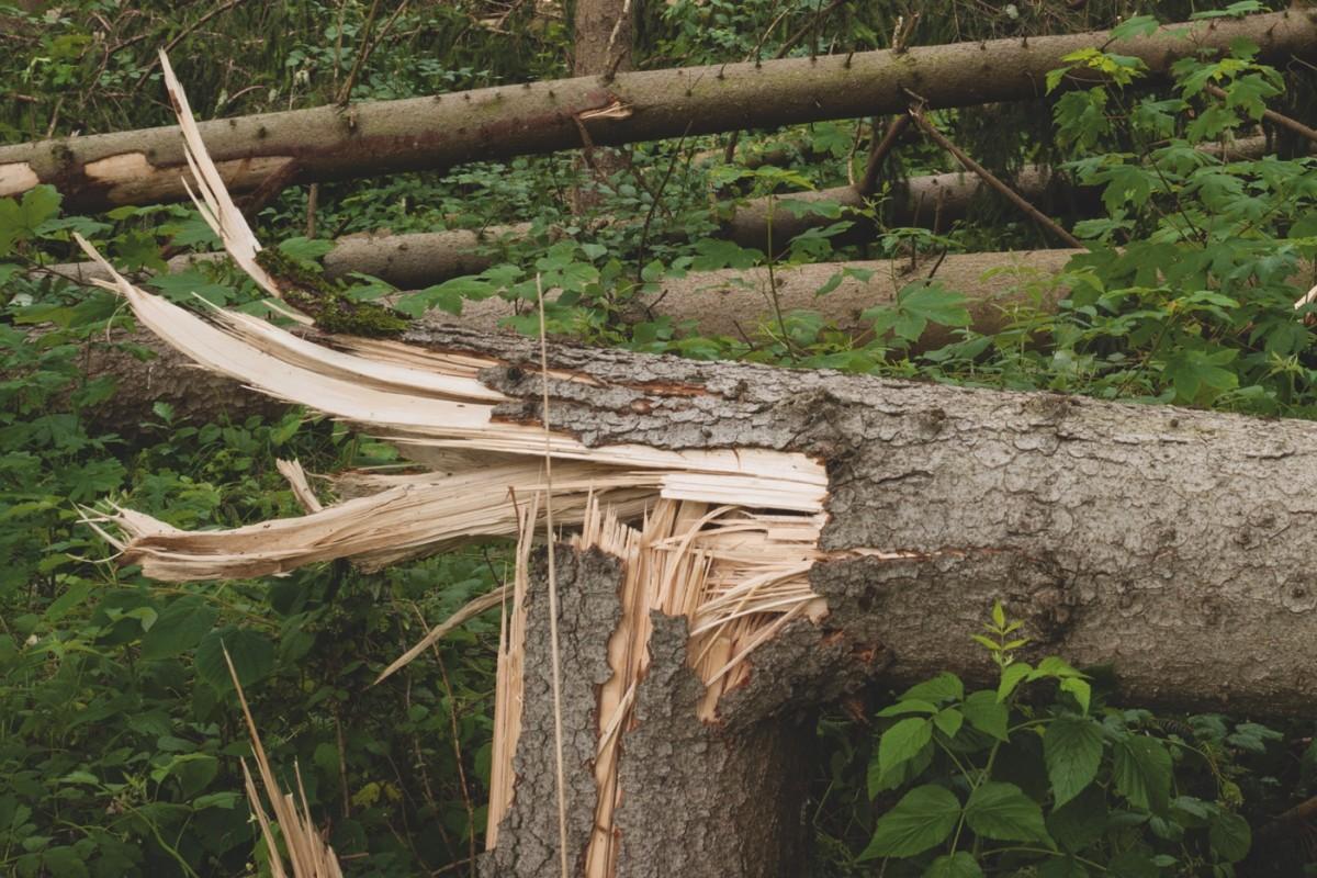 Sturmschäden an Bäumen beseitigen