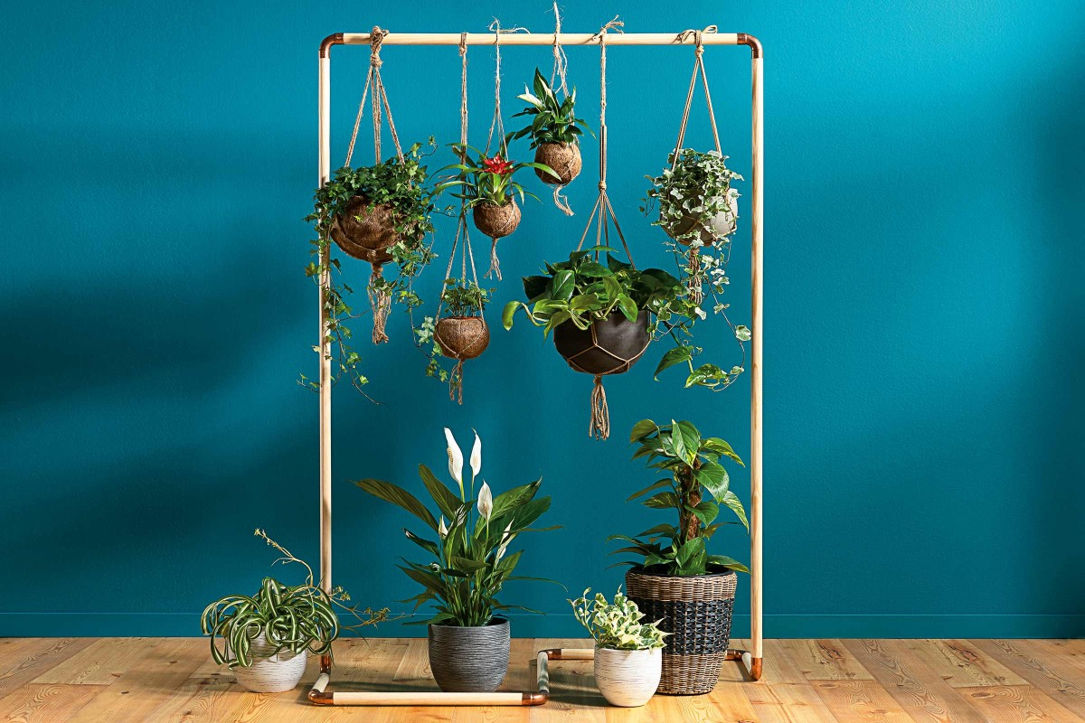 Luftreinigende Pflanzen Raumteiler