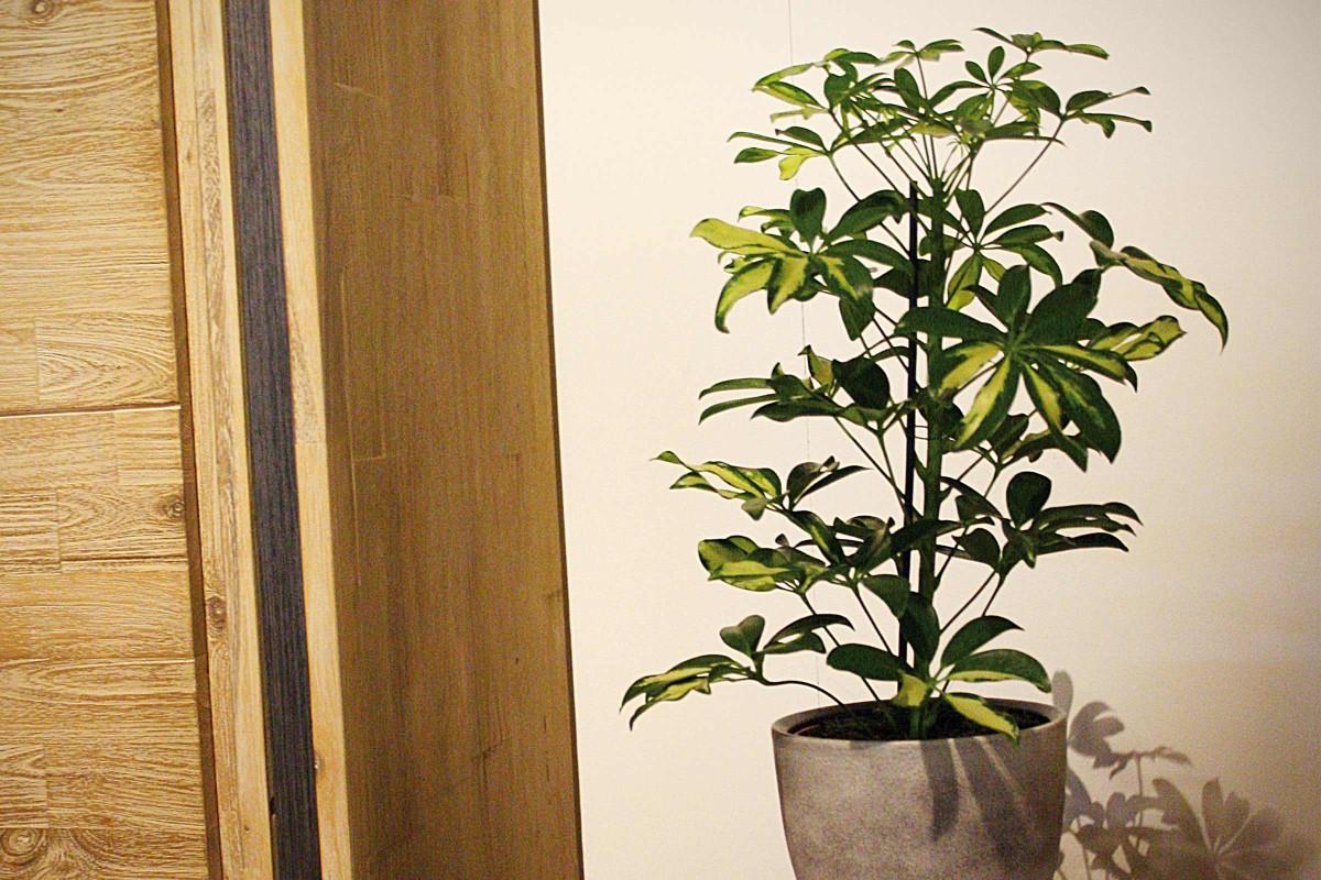 Luftreinigende Pflanzen Schalldaempfer