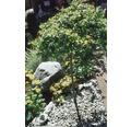 Carrara-Marmorkies weiss 8-16mm, 1000Kg