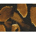 Wassertransferdruck Folie Schlange braun CD-89 100 x 50 cm