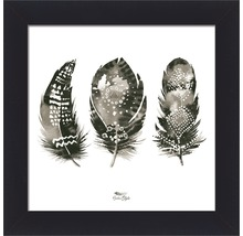 Gerahmtes Bild Feather III 38x38 cm