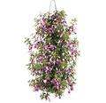 Wandhänger Blühpflanzen FloraSelf sortiert