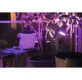 Philips hue LED Garten-Spot Basis Set IP65 3x8W 3x640 lm 2000-6500 K warmweiß bis tageslichtweiß 24V - Kompatibel mit SMART HOME by hornbach