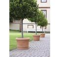 Pflanztopf geli Palermo Kunststoff Ø 45 H 34 cm terracotta