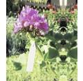 Pflanzenschilder FloraSelf Kunststoff 25 Stk
