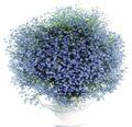 Männertreu FloraSelf Lobelia erinus Ø 12 cm Topf