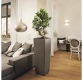 Pflanzvase Lechuza Cubico Alto Premium 40 40x40x105 cm taupe inkl. Pflanzeinsatz und Erdbewässerungssystem