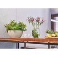 Blumenschale Cubeto Stone Kunststoff 30x30x13 cm sandbeige inkl. Erdbewässerungsystem und Wasserstandsanzeiger
