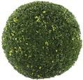 Buchsbaum Kugel Buxus sempervirens Ø 60-70 cm Co 35 L