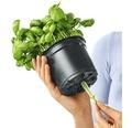 Blumentopf Lechuza Cube Glossy Green Wall H 14 cm Kunststoff rot inkl. Halterung, Wasserstandsanzeiger, Erdbewässerungsystem und Pflanzeinsatz