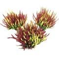 Besenheide, Heidekraut, Knospenheide FloraSelf Calluna vulgaris Beauty Sisters Ø 11 cm Topf