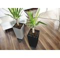 Blumentopf Lafiora Elise Kunststoff 15 x 15 x 26 cm grau inkl.Erdbewässerungsystem und Pflanzeinsatz