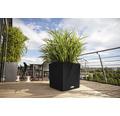 Pflanzkübel Lechuza Cube Cottage 30 schwarz inkl. Erdbewässerungssystem