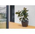 Blumentopf Lafiora Quadrato Kunststoff 34 x 34 x 32 cm anthrazit