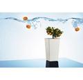 Blumentopf Lafiora Elise Kunststoff 15 x 15 x 26 cm weiß inkl. Erdbewässerungsystem und Pflanzeinsatz