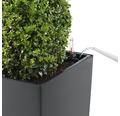 Pflanzvase Lechuza Cubico 30 Komplettset silber inkl. Erdbewässerungsystem Pflanzeinsatz Substrat Wasserstandsanzeiger