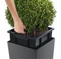 Pflanzvase Lechuza Cubico 40 Komplettset anthrazit inkl. Erdbewässerungsystem Pflanzeinsatz Substrat Wasserstandsanzeiger