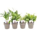 Grünpflanzen-Mix Easy Care FloraSelf Ø 12 cm Topf versch. Sorten inkl. keramik Übertopf
