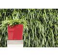Pflanzkübel Lechuza Cube 40 Komplettset rot inkl. Erdbewässerungsystem Pflanzeinsatz Substrat Wasserstandsanzeiger