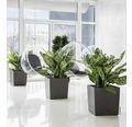 Pflanzkübel Lechuza Cube 50 Komplettset anthrazit inkl. Erdbewässerungsystem Pflanzeinsatz Substrat Wasserstandsanzeiger