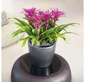 Blumentopf Lechuza Classico LS Ø 35 x H 33 cm anthrazit inkl. Erdbewässerungsystem Pflanzeinsatz Substrat Wasserstandsanzeiger