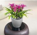 Blumentopf Lechuza Classico LS Ø 35 x H 33 cm silber inkl. Erdbewässerungsystem Pflanzeinsatz Substrat Wasserstandsanzeiger
