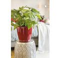 Blumentopf Lechuza Classico LS Ø 35 x H 33 cm rot inkl. Erdbewässerungsystem Pflanzeinsatz Substrat Wasserstandsanzeiger