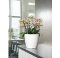 Blumentopf Lechuza Classico LS Ø 35 x H 33 cm weiß inkl. Erdbewässerungsystem Pflanzeinsatz Substrat Wasserstandsanzeiger