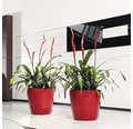 Blumentopf Lechuza Classico LS Ø 43 x H 40 cm rot inkl. Erdbewässerungsystem Pflanzeinsatz Substrat Wasserstandsanzeiger