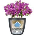 Blumentopf Lechuza Classico Color 18 muskat inkl. Erdbewässerungssystem