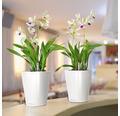 Blumentopf Lechuza Deltini Kunststoff Ø 14 H 18 cm weiß inkl. Erdbewässerungssystem und Wasserstandsanzeiger