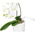 Blumentopf Lechuza Deltini Kunststoff Ø 14 H 18 cm anthrazit inkl. Erdbewässerungssystem und Wasserstandsanzeiger