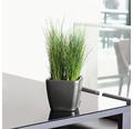 Pflanzkübel Lechuza Quadro 21 x 21 x H 20 cm anthrazit inkl. Erdbewässerungsystem Pflanzeinsatz Substrat Wasserstandsanzeiger