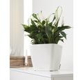 Pflanzkübel Lechuza Quadro 28 x 28 x H 26 cm weiß inkl. Erdbewässerungsystem Pflanzeinsatz Substrat Wasserstandsanzeiger