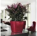 Pflanzkübel Lechuza Quadro 28 x 28 x H 26 cm rot inkl. Erdbewässerungsystem Pflanzeinsatz Substrat Wasserstandsanzeiger