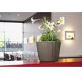 Pflanzkübel Lechuza Quadro 35 x 35 x H 33 cm taupe inkl. Erdbewässerungsystem Pflanzeinsatz Substrat Wasserstandsanzeiger