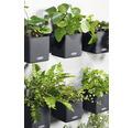 Blumentopf Lechuza Cube Color Green Wall H 14 cm Kunststoff grau inkl. Halterung, Wasserstandsanzeiger, Erdbewässerungsystem und Pflanzeinsatz