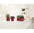 Blumentopf Lechuza Cube Glossy Kunststoff 14x14x14 cm rot inkl. Erdbewässerungsystem und Pflanzeinsatz