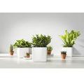 Blumentopf Lechuza Cube Glossy Kunststoff 16x16x16 cm weiß inkl. Erdbewässerungsystem und Pflanzeinsatz