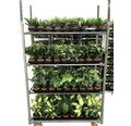 Grünpflanzen-Mix FloraSelf H 20-50 cm Ø 12 cm Topf versch. Sorten