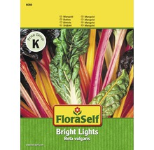 Mangold 'Bright Lights' FloraSelf Gemüsesamen