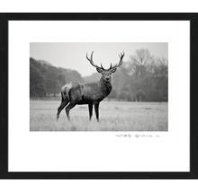 Gerahmtes Bild Deer 55x65 cm