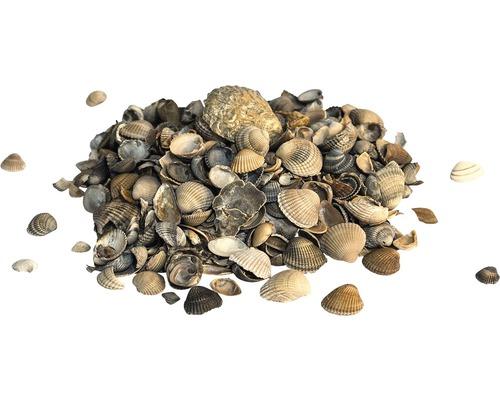 Muscheln 8-16 mm 500 kg