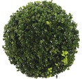 Buchsbaum-Kugel FloraSelf Buxus sempervirens H 25-35 cm Co 5 L