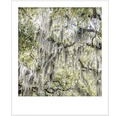 Premium Wandfarbe Style Color SELECTION konservierungsmittelfrei Savannah's Melodie 2,5 L