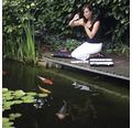 Algenvorbeugung JBL PhosEx Pond Direct 2,5 l