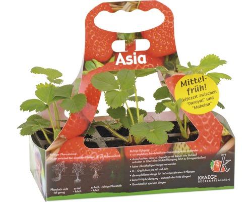 Erdbeere Fragaria x ananassa 'Asia' 6 Stk