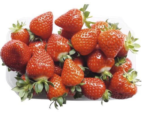 Erdbeere Fragaria x ananassa 'Glorielle' 6 Stk